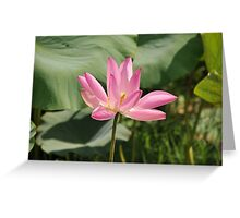 Water Lily - from a Billabong Northern Australia Greeting Card