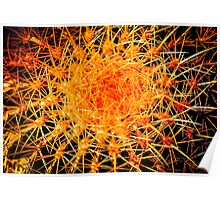 IS IT A CACTUS OR AN ORANGE SUN? Flowers Poster