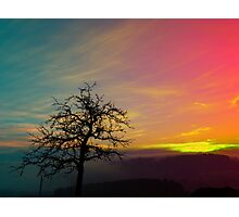 Old tree and colorful sundown panorama | landscape photography Photographic Print