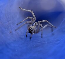 macro photography of a Spider  by PhotoStock-Isra