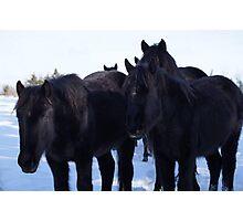 Windsor, Nova Scotia, Wild Horses Photographic Print