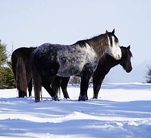 Windsor, Nova Scotia, Wild Horses by snappyhappy