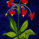 Shooting Star… Flowers by Anne Gitto