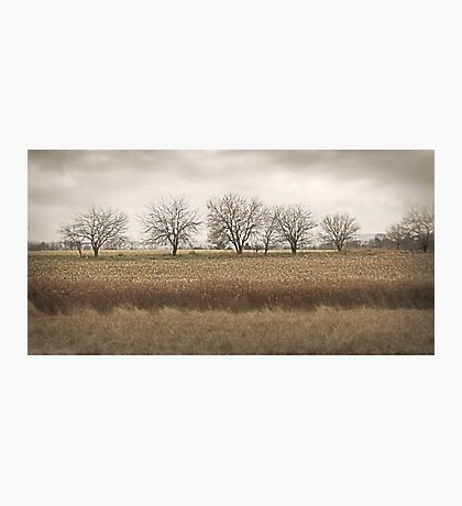 End of Autumn Photographic Print