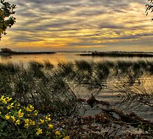 Delta Evening by Barbara  Brown