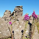 Foxgloves at Houndtor by kalaryder