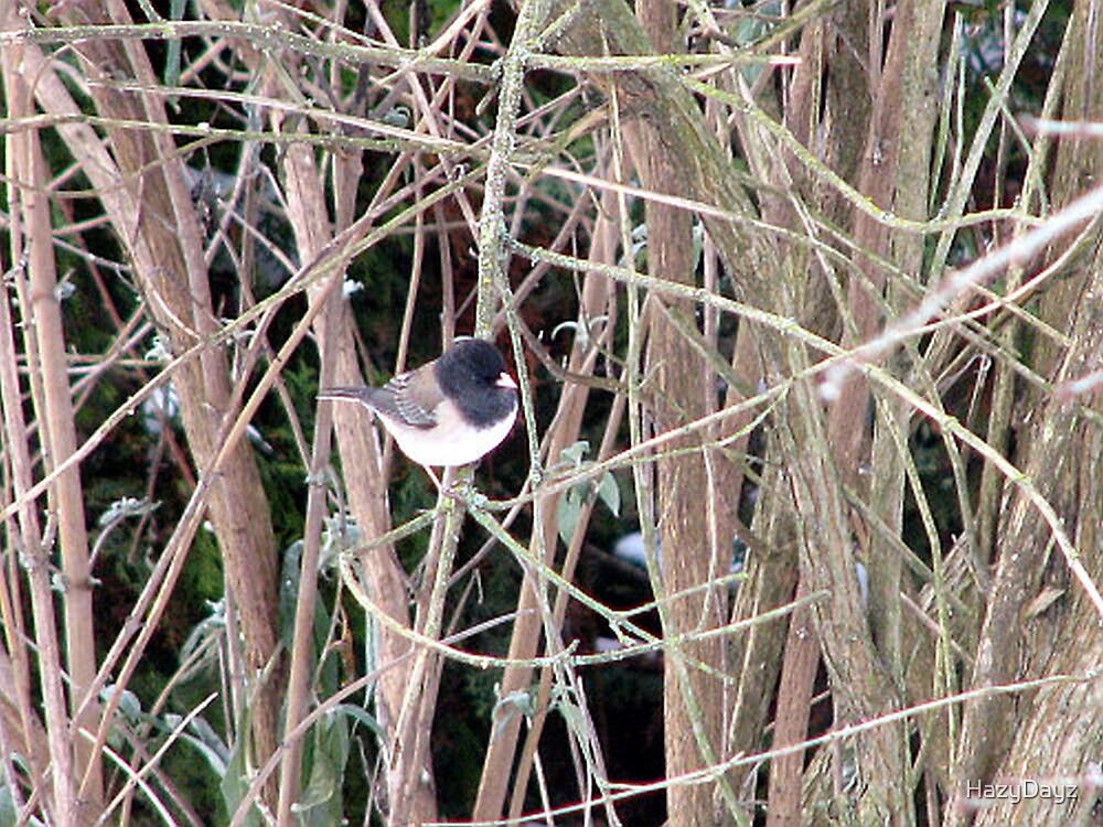 Bird in the Bush by HazyDayz