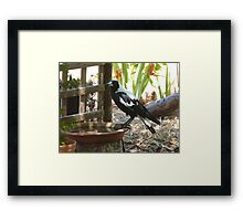 The Magpies know where to keep cool this Hot weather. 'Arilka' Framed Print