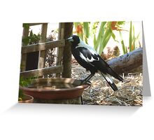 The Magpies know where to keep cool this Hot weather. 'Arilka' Greeting Card