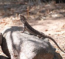One of the native Bearded Dragons, 'Arilka' Mount Pleasant, Aust. by Rita Blom