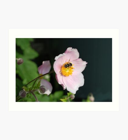 Flowers and bees Art Print