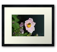 Flowers and bees Framed Print
