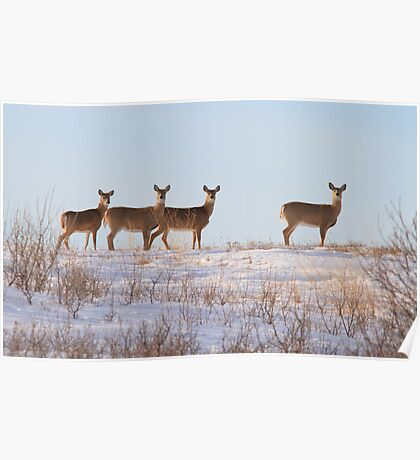 A Lot of Doe Poster