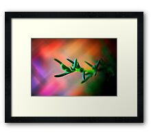 Pig face plant abstract Framed Print