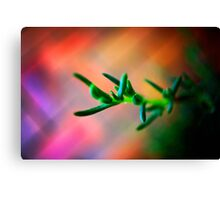 Pig face plant abstract Canvas Print