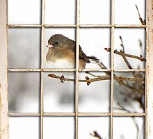 Bird at my Window by Trudy Wilkerson