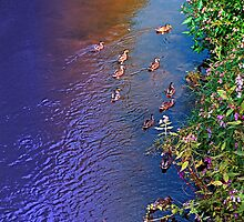 Ducks on patrol   waterscape photography by Patrick Jobst