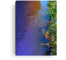 Ducks on patrol | waterscape photography Canvas Print