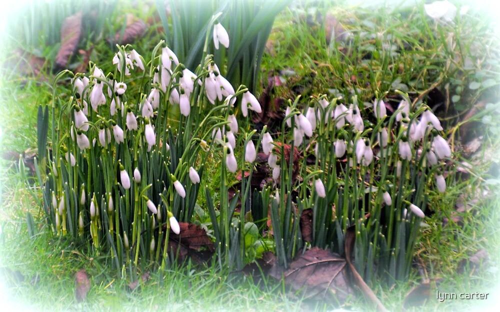 Spring Has Sprung......... by lynn carter