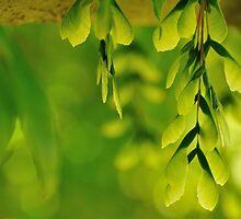 samaras - wings of green by metriognome