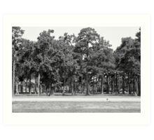 Southern Trees-South Carolina Art Print