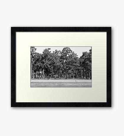 Southern Trees-South Carolina Framed Print