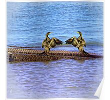 Dancing Cormorants Poster