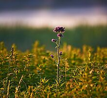 """Thistle"" by Andreas Koerner"