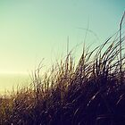 Beach Grass by LawsonImages