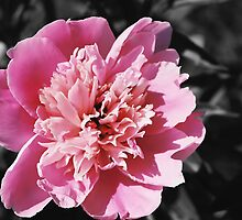 Blush by Emily Rose