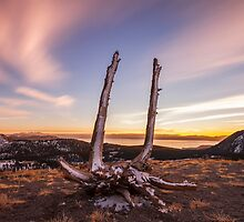 The Spirit of Washoe by Richard Thelen