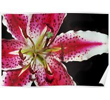 Blushing Petals Poster