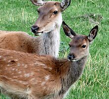 Doe and fawn by HandsonHart