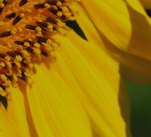 Sunflower Petals Sticker