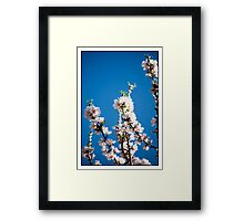 Blooming trees Framed Print