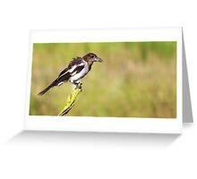 Baby Butcher Bird  Greeting Card