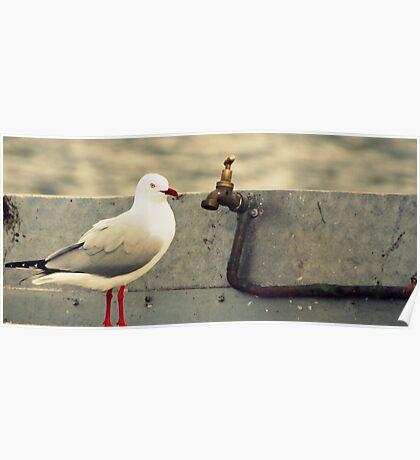 What's a Bird gotta do? Poster