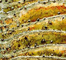 Stonehill Glen by Kathie Nichols