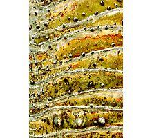 Stonehill Glen Photographic Print