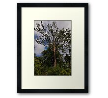 Rainbow Eucalyptus - Tall, Proud and Beautiful Framed Print