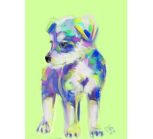 Dog Cute Puppy Photographic Print