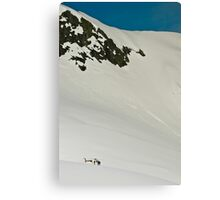 The Fox and Franz Joseph Glaciers Canvas Print