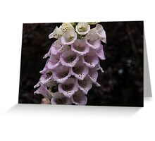 Exquisite Foxgloves Up Close Greeting Card