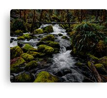 A Day In The Woods  Canvas Print