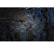 Otter - Melting in Reflections Photographic Print