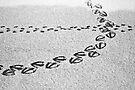 Traces in the Snow by Jo Nijenhuis