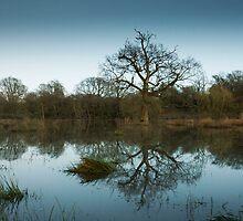 Still flooded  by stevemint456