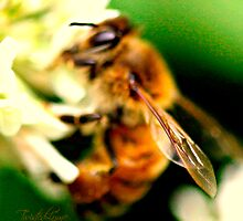 Honey Bee by Twisted-Lyme