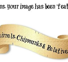 Squirrels, Chipmunks & Relatives Banner by Morag Bates