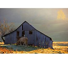 Evening At The Barn Photographic Print